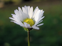White Yellow flower